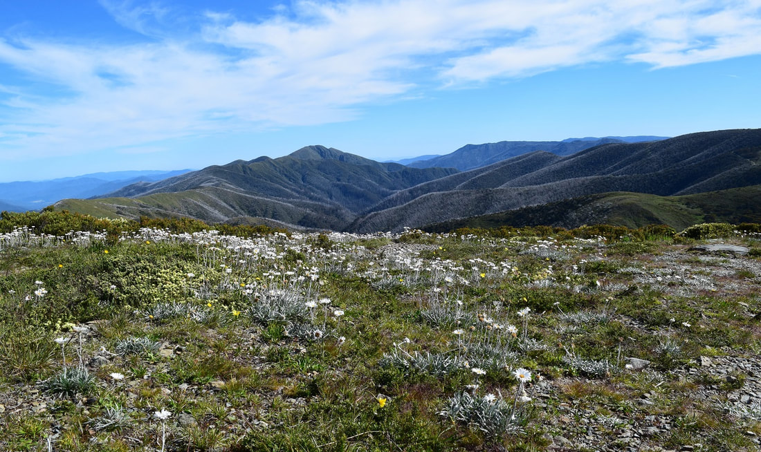 Great Alpine Road, Hotham