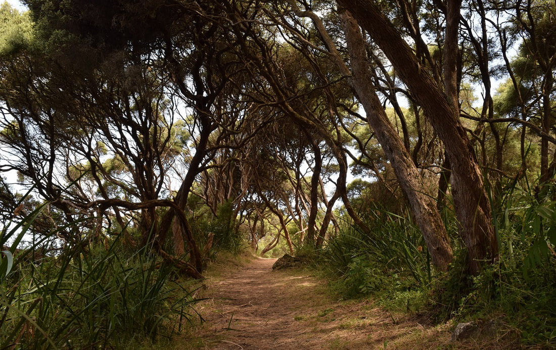 Enchanted Forest Walking Track